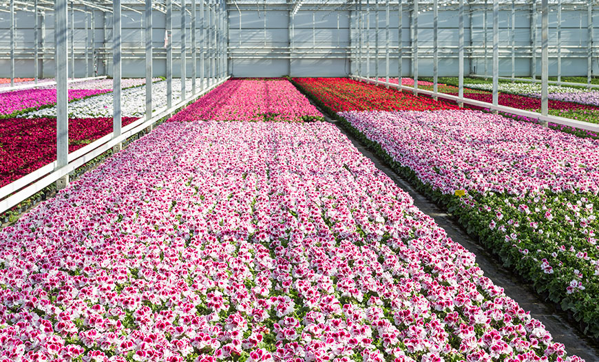 Ornamental Plant Production Greenhouses
